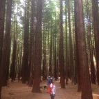 Rotorua: Redwoods and Veggie Burgers